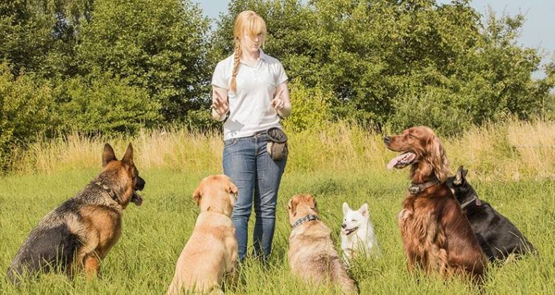 Essential Tips to Train Your Dog | How to Train Your Dog In 2021- Dog Training